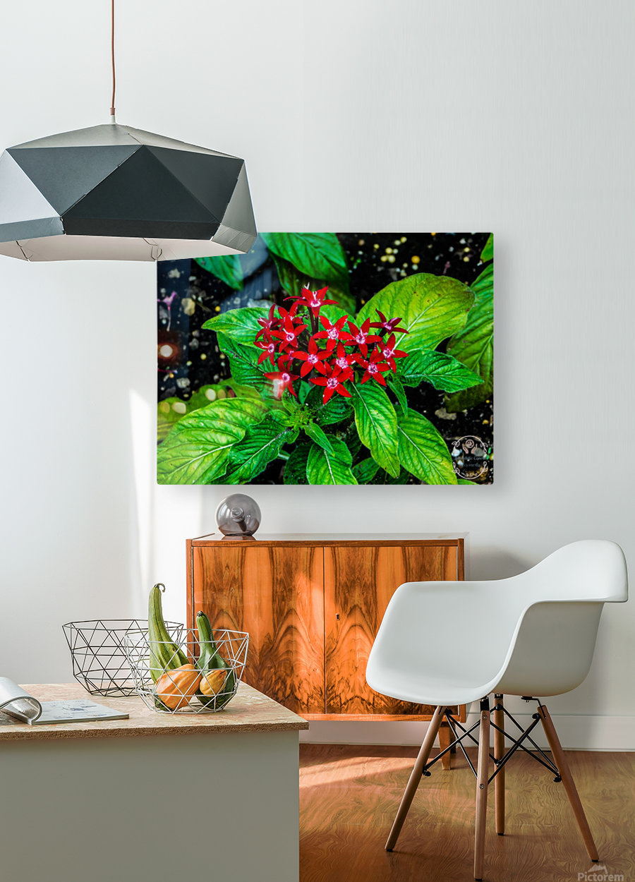 Beauty in the Flower  HD Metal print with Floating Frame on Back