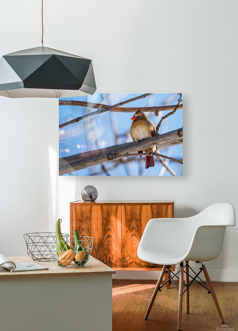 Madame Cardinal  HD Metal print with Floating Frame on Back