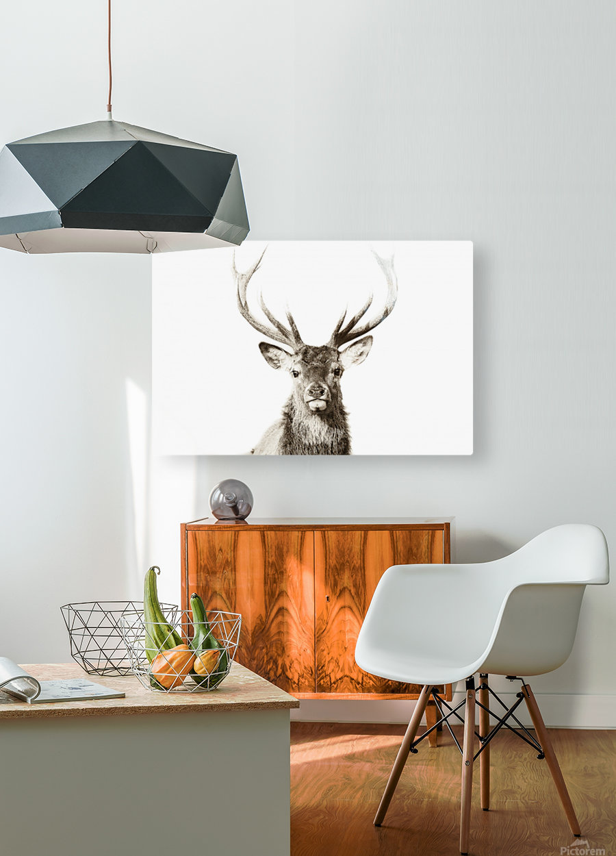 Cerf rouge  HD Metal print with Floating Frame on Back