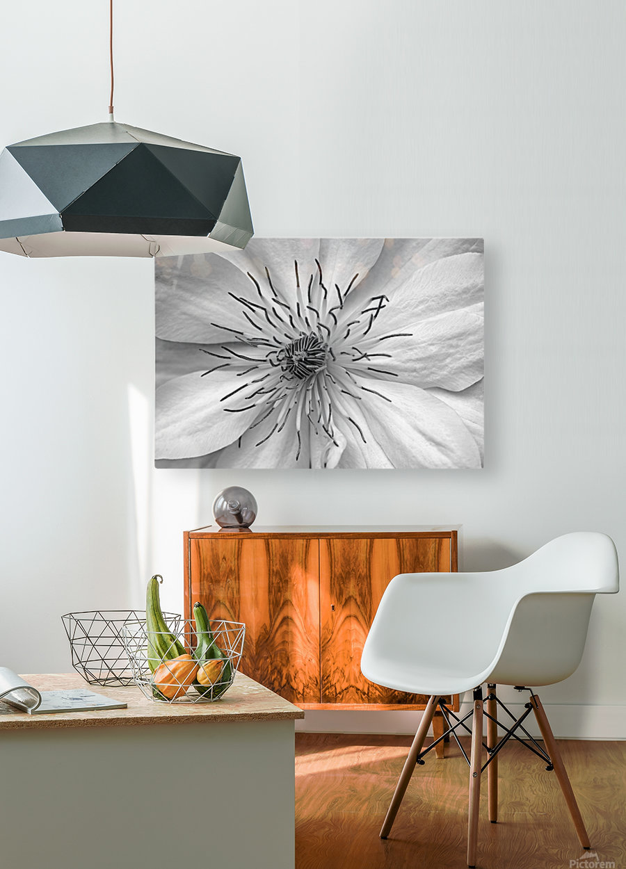 Clematis White  HD Metal print with Floating Frame on Back