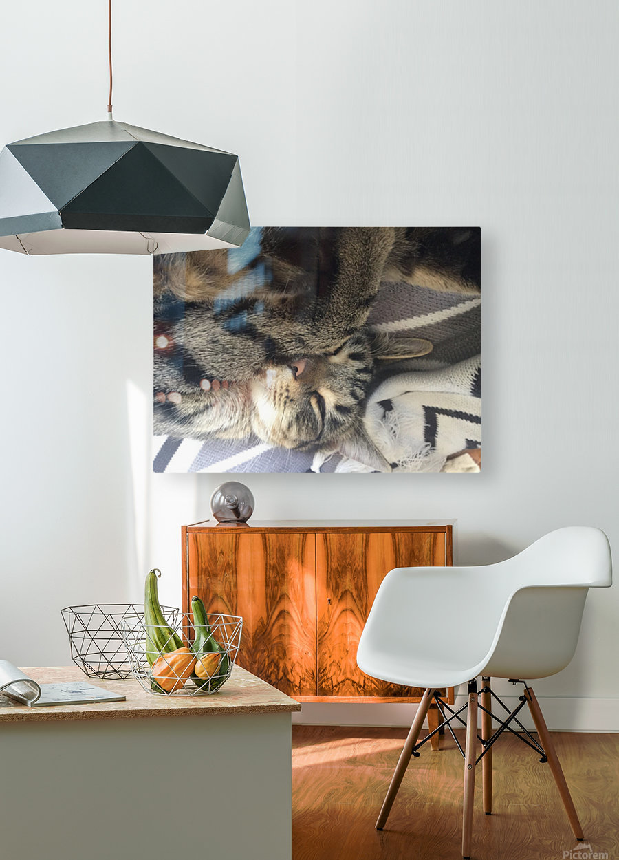 Gizmo - sleepy  Impression métal HD avec cadre flottant sur le dos
