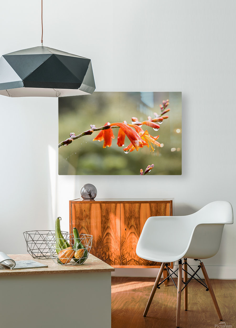 Orange Blooms with droplets  HD Metal print with Floating Frame on Back