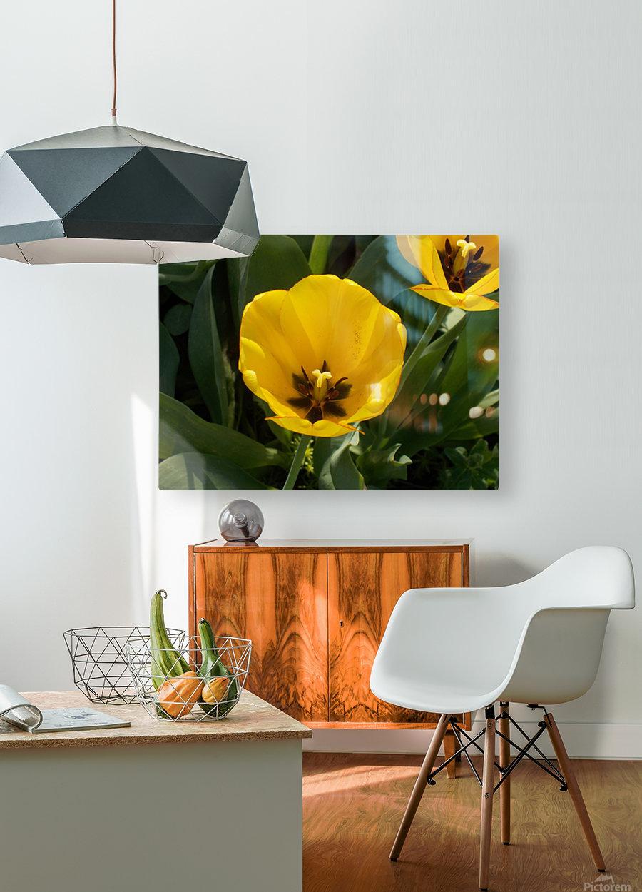 DSCN0764  HD Metal print with Floating Frame on Back