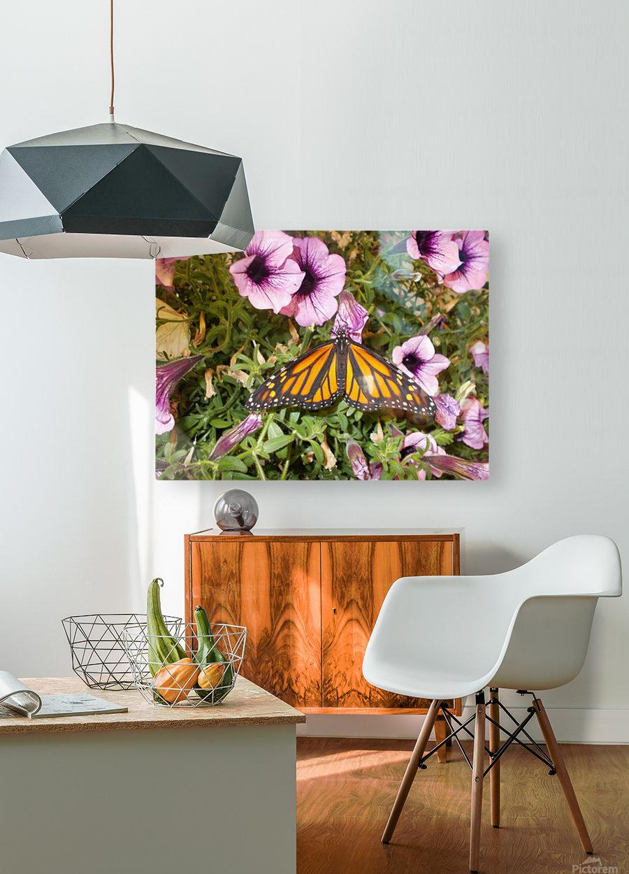 DSCN0649  HD Metal print with Floating Frame on Back