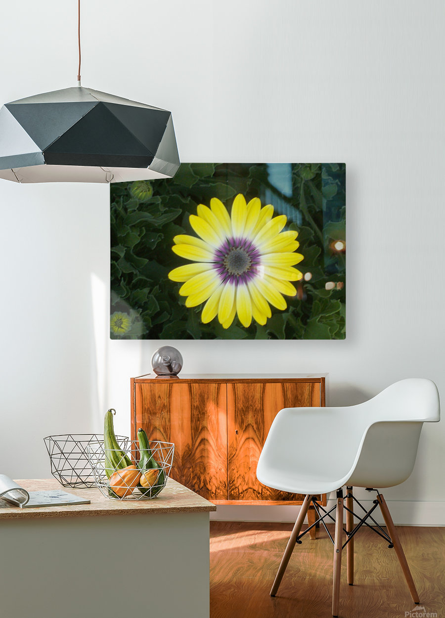 DSCN0662  HD Metal print with Floating Frame on Back