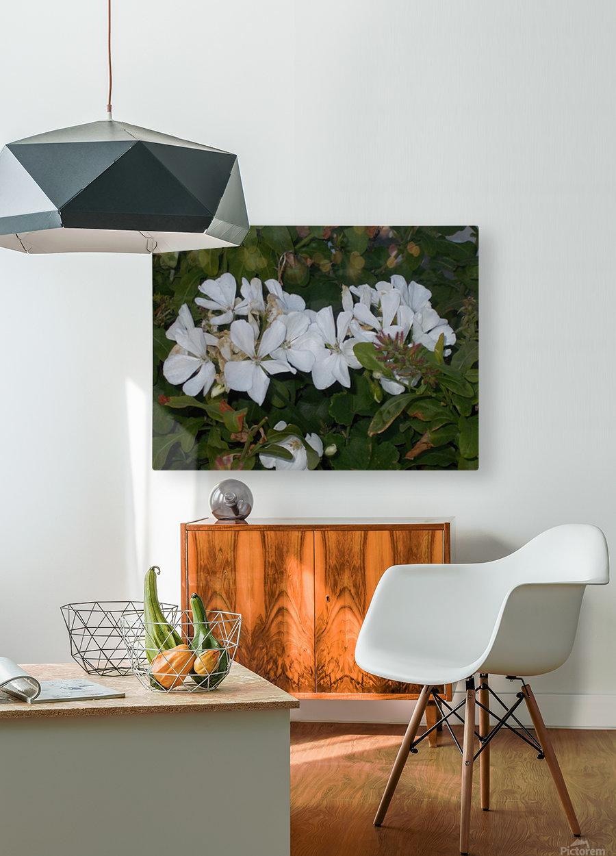 DSCN0570  HD Metal print with Floating Frame on Back