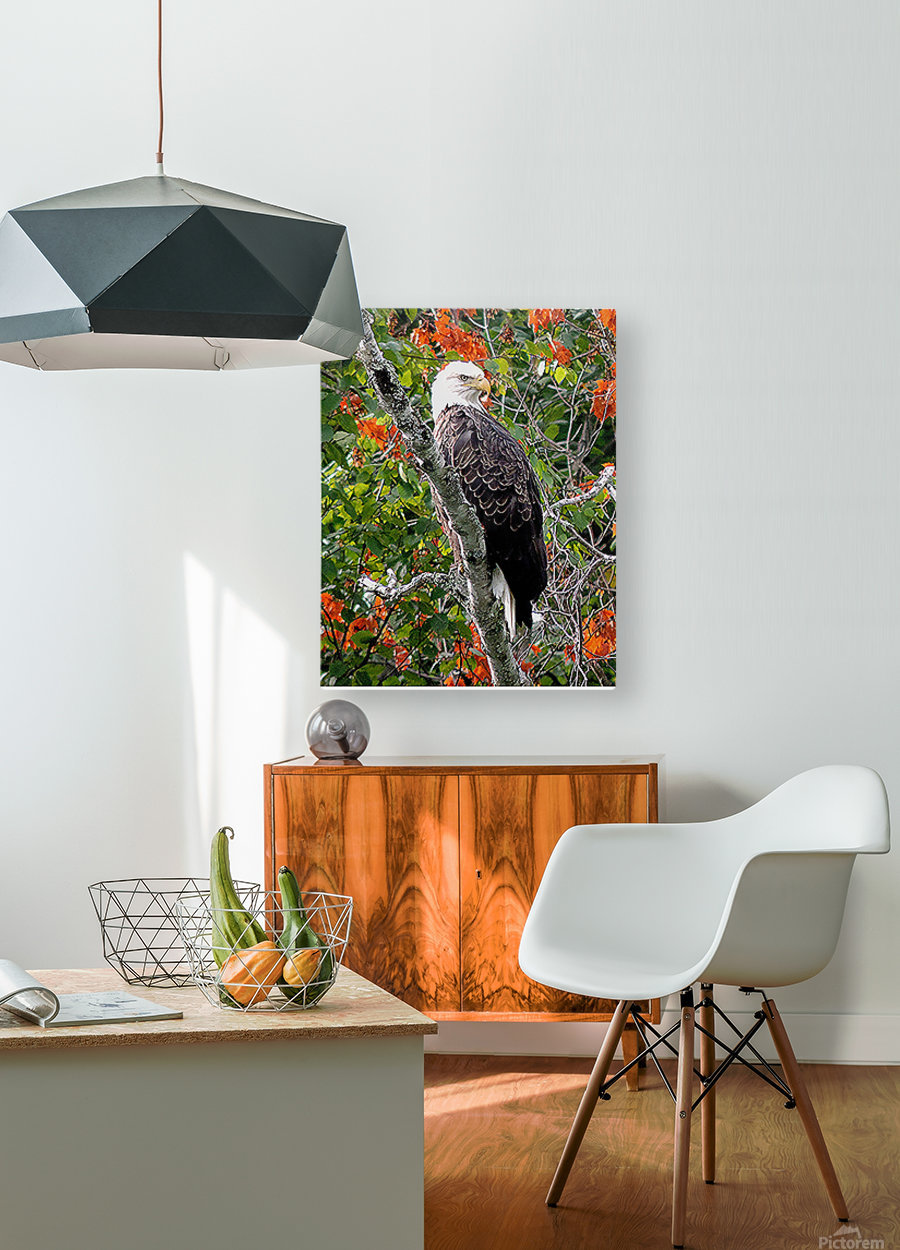 AutumnEagle  HD Metal print with Floating Frame on Back