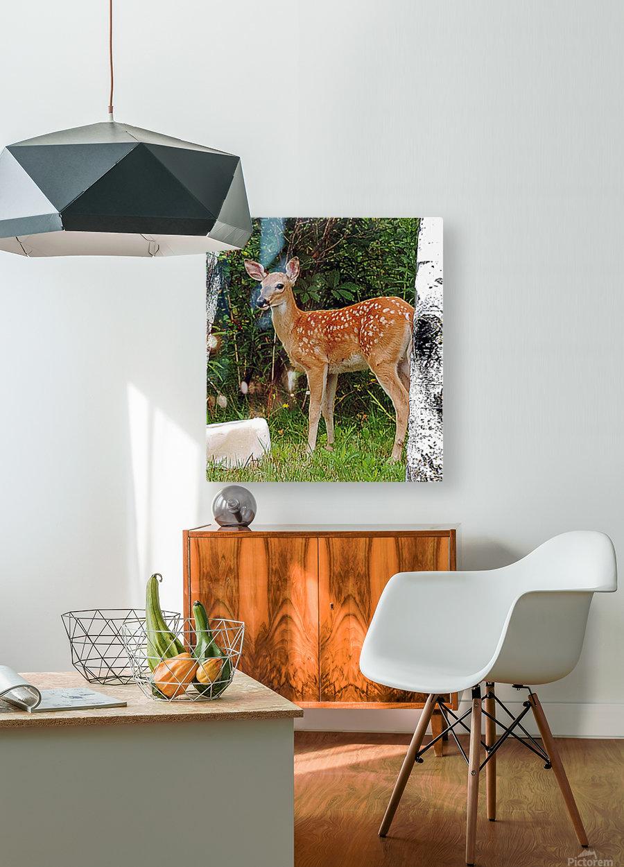FawnBySaltBlock3  HD Metal print with Floating Frame on Back