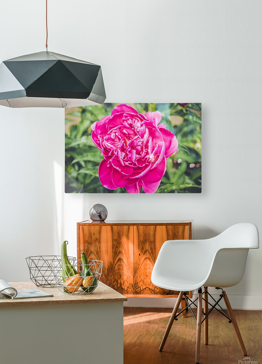 Deadly Beautiful Peonies  HD Metal print with Floating Frame on Back