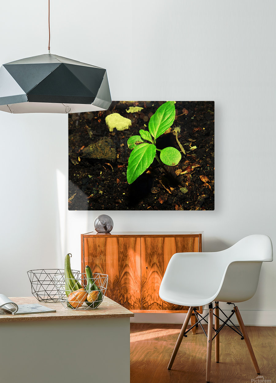 C (11)  HD Metal print with Floating Frame on Back