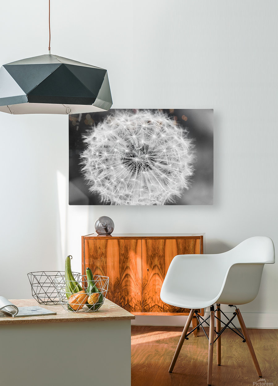 Dandylion black and White  HD Metal print with Floating Frame on Back