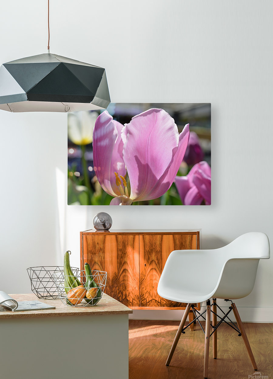 Purple Tulip Photograph  HD Metal print with Floating Frame on Back