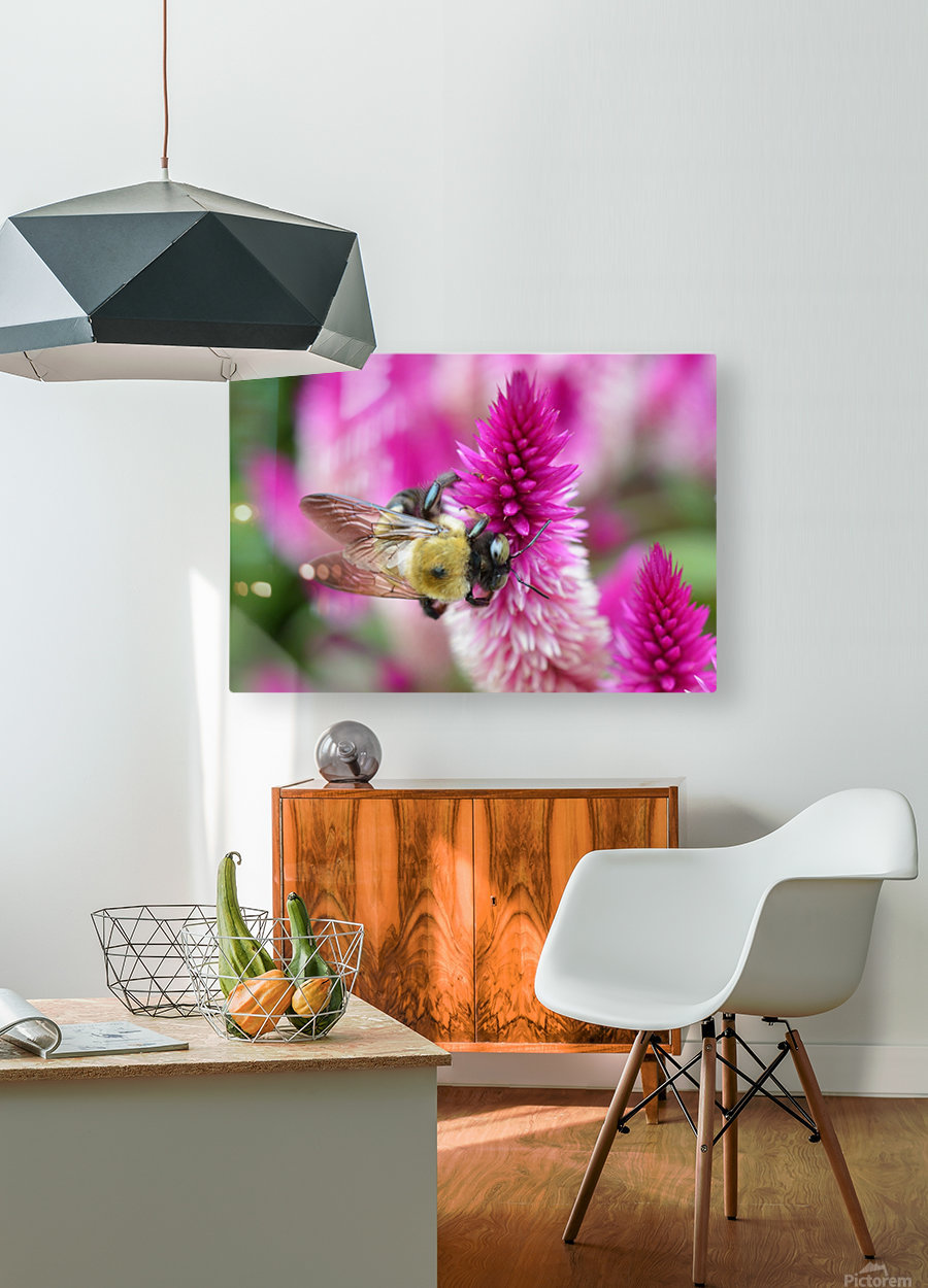 Bee On Pink Flower Photograph  HD Metal print with Floating Frame on Back