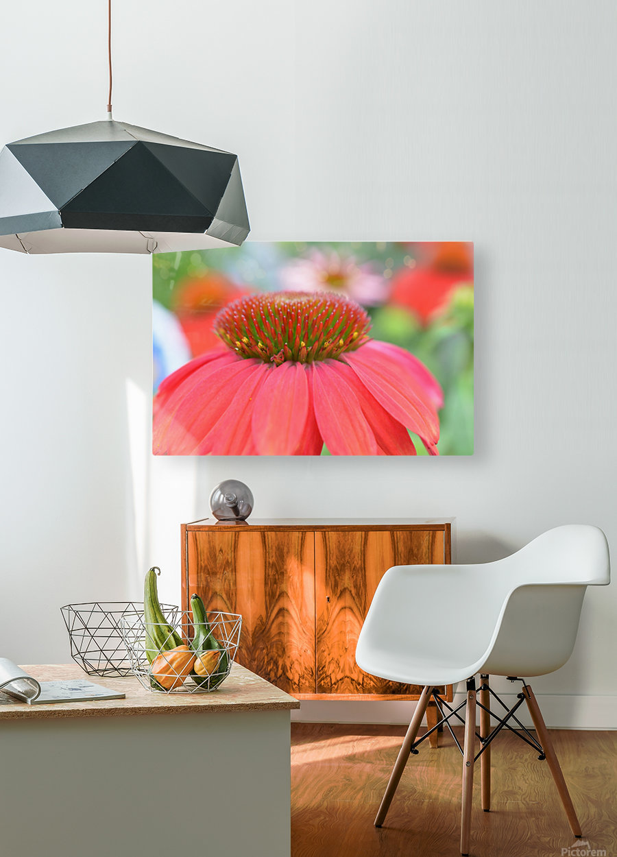 Orange Flower Photograph  HD Metal print with Floating Frame on Back