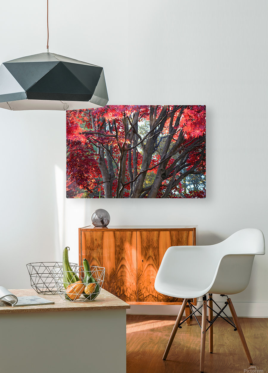 Beautiful Red Fall Foliage  HD Metal print with Floating Frame on Back