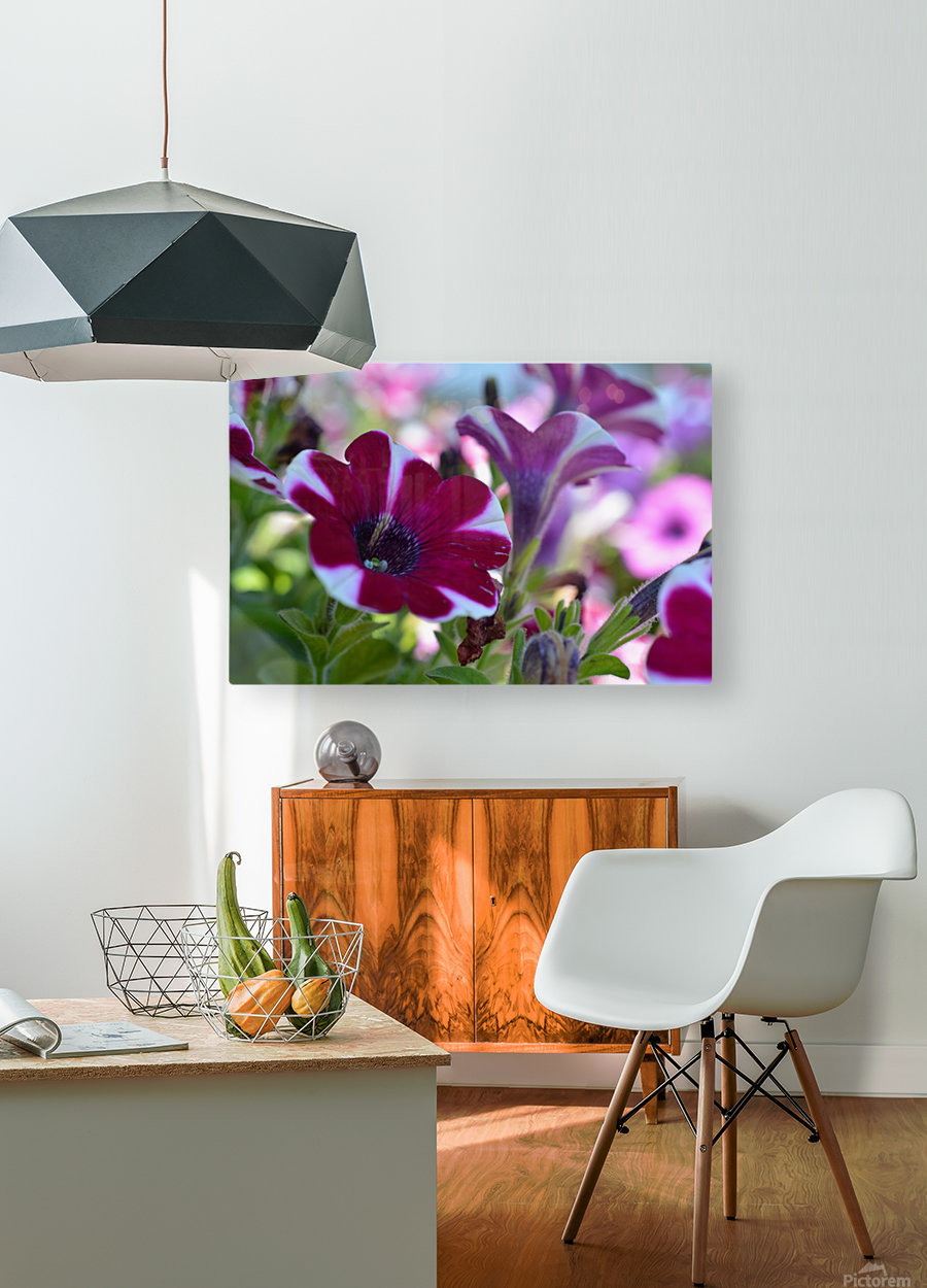 Pink Flowers Photograph  HD Metal print with Floating Frame on Back