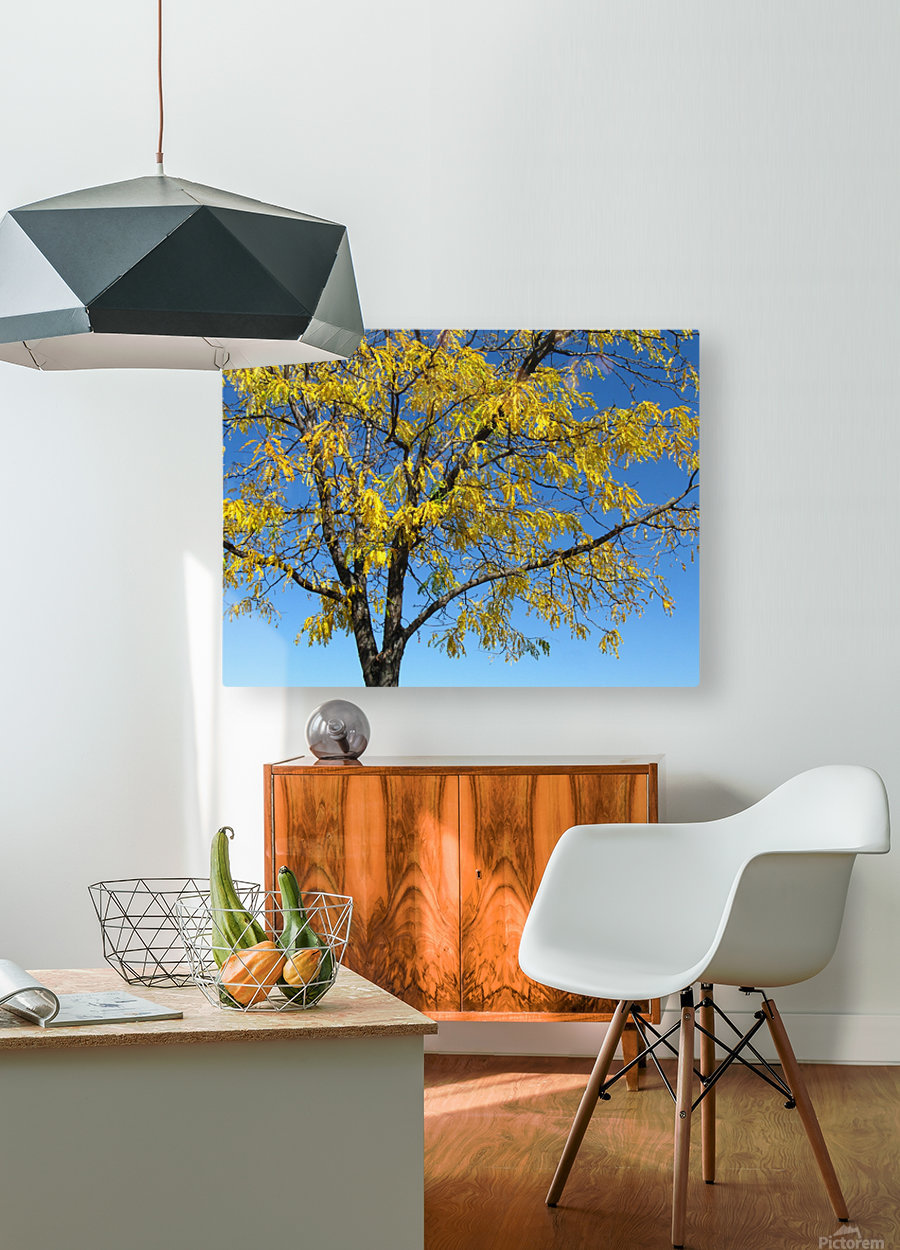 Beautiful Yellow Fall Foliage  HD Metal print with Floating Frame on Back