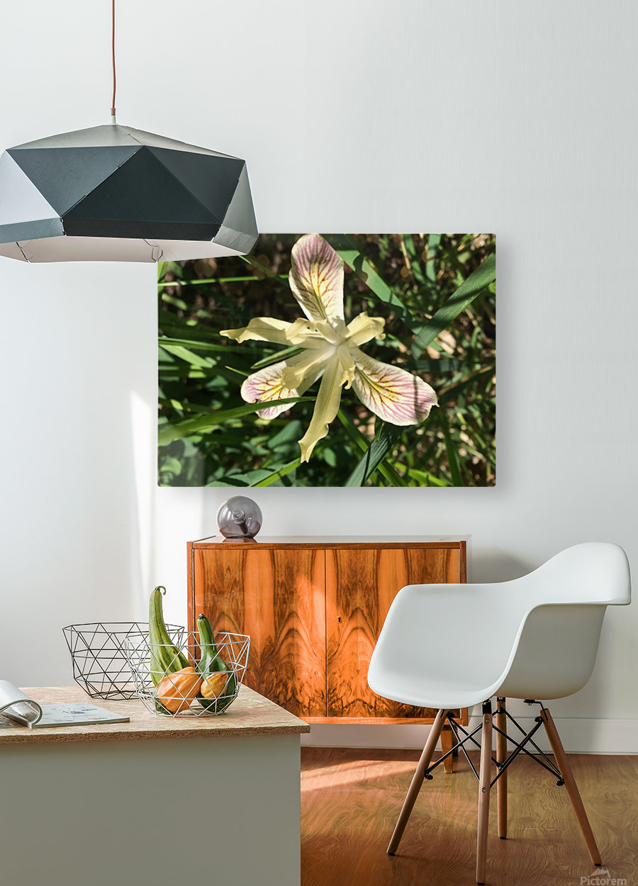 Siskiyou Iris  HD Metal print with Floating Frame on Back