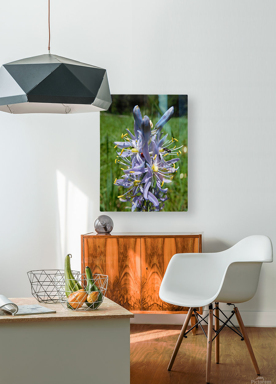 Great Camas  HD Metal print with Floating Frame on Back