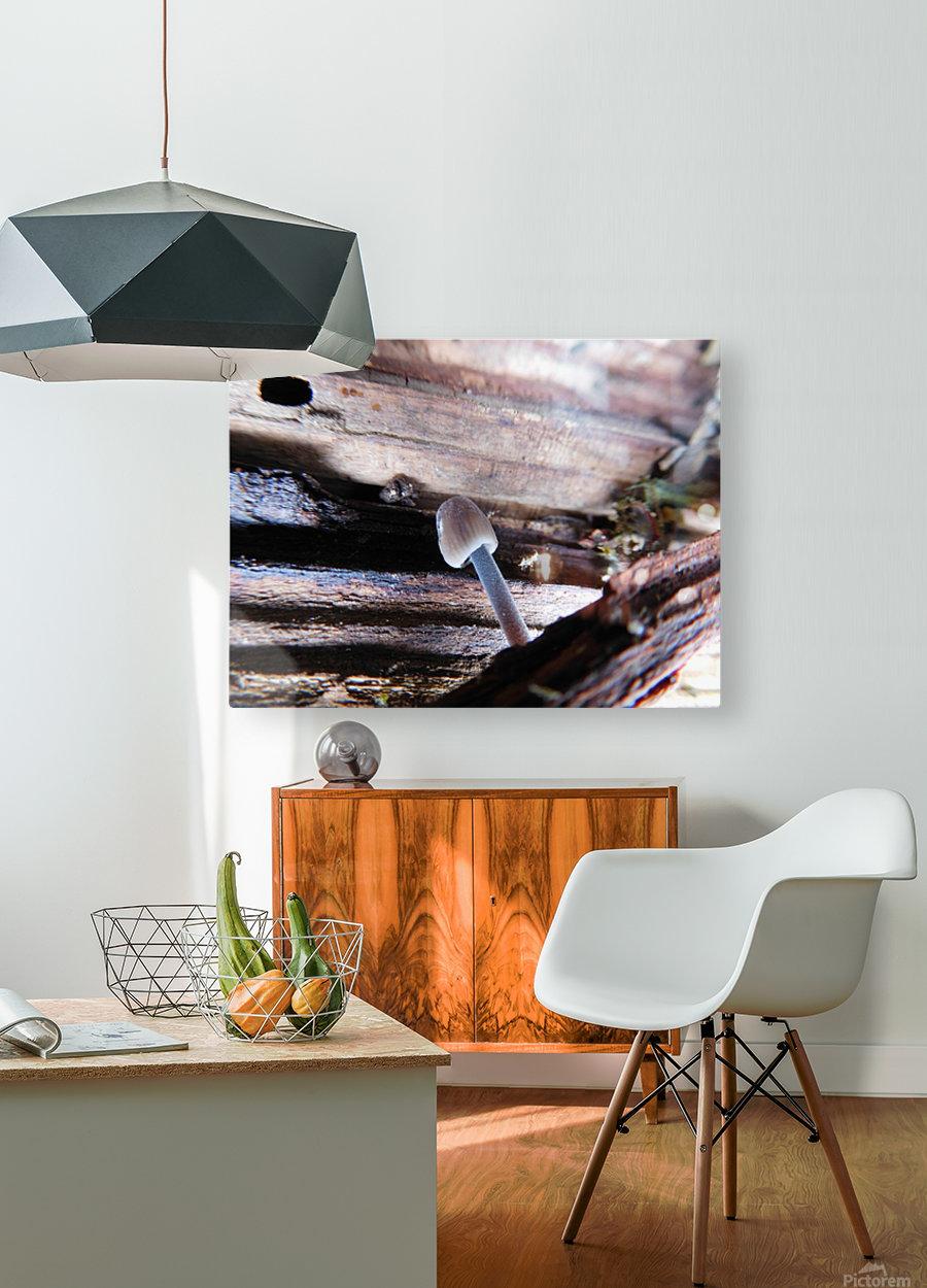 Brave Little Mushroom  HD Metal print with Floating Frame on Back
