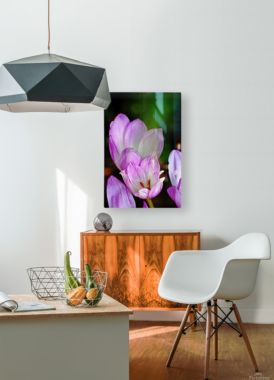 Fall Crocus  HD Metal print with Floating Frame on Back