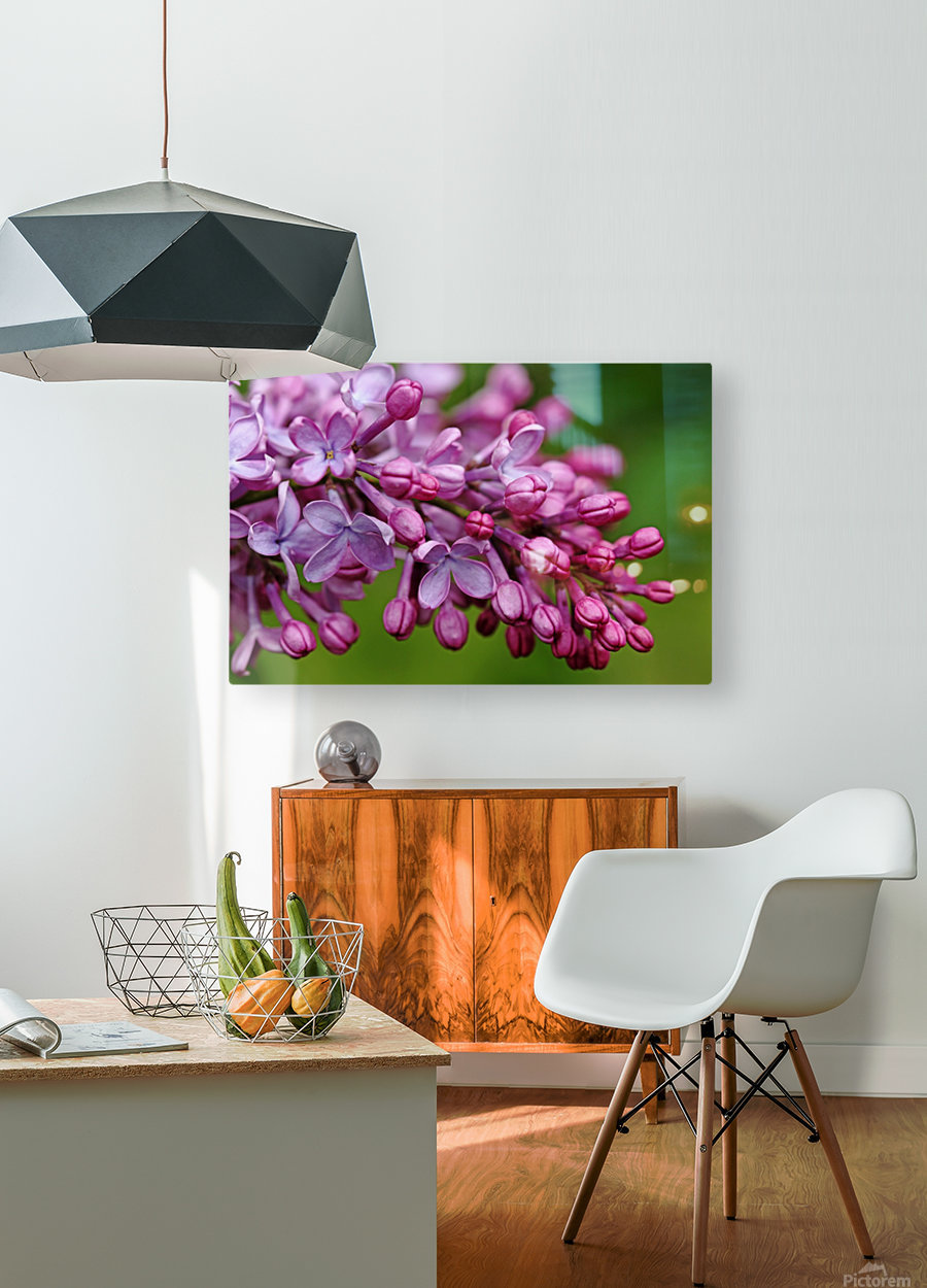 Fragrance Of Spring  HD Metal print with Floating Frame on Back