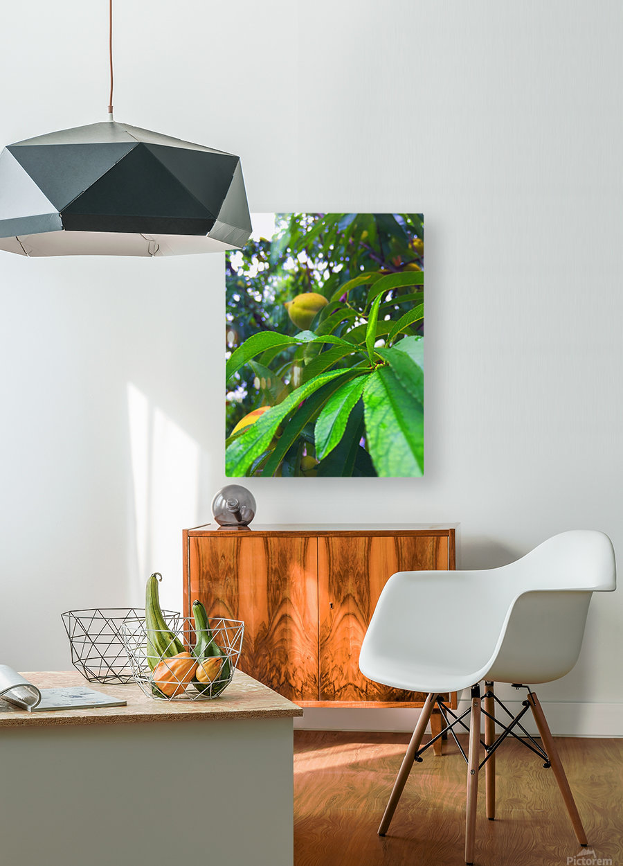 Peach   HD Metal print with Floating Frame on Back