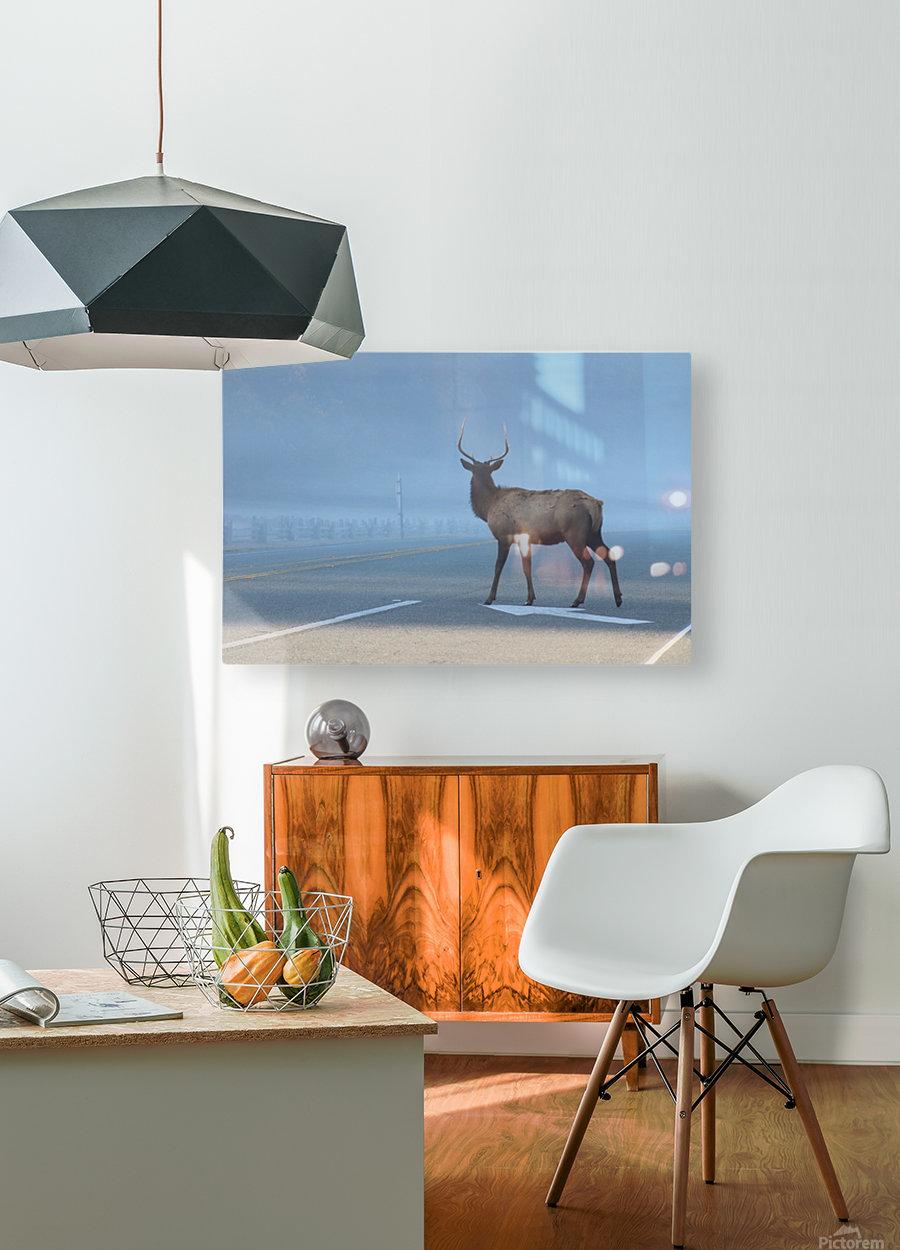 Elk Crossing  HD Metal print with Floating Frame on Back