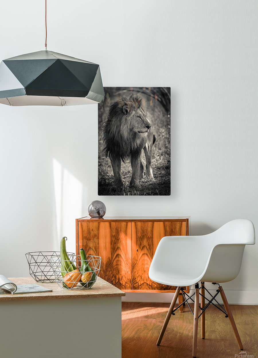 The King of South Africa - 3  HD Metal print with Floating Frame on Back