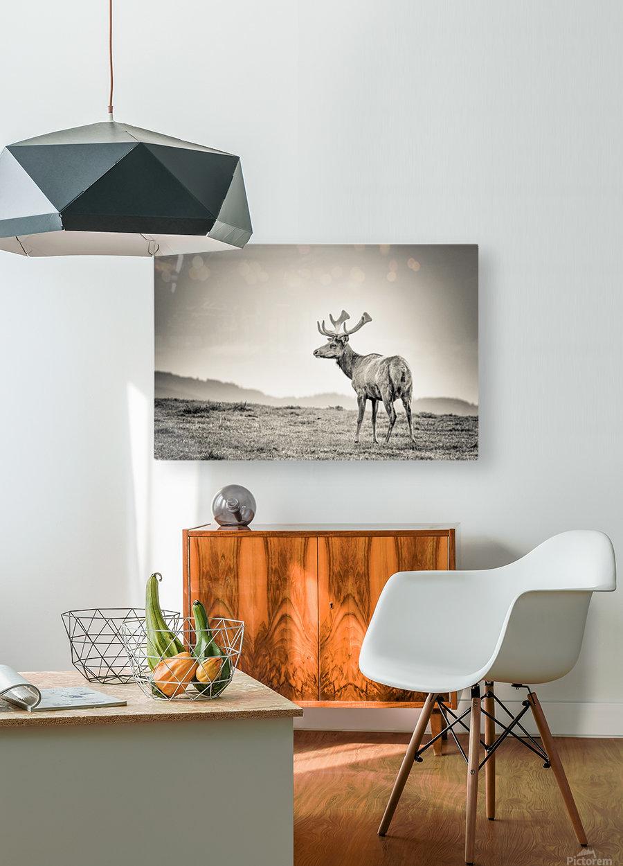 Tule Elk  HD Metal print with Floating Frame on Back