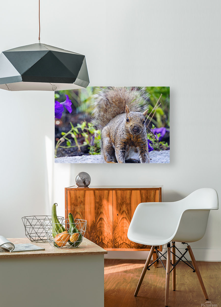 Looking for me  HD Metal print with Floating Frame on Back