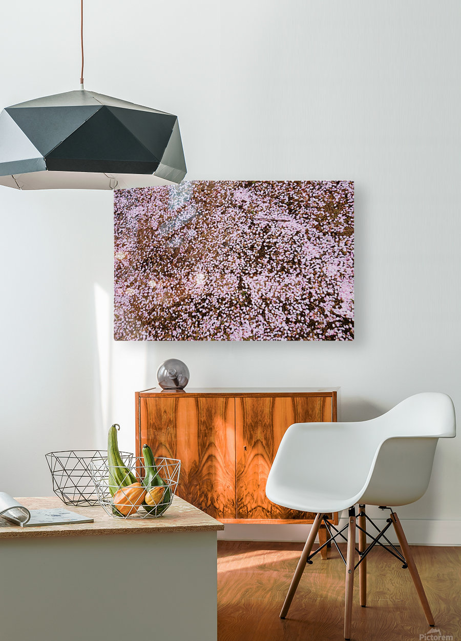 Sakura Petals  HD Metal print with Floating Frame on Back