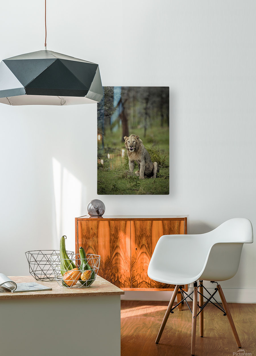 A Lions Tongue  HD Metal print with Floating Frame on Back