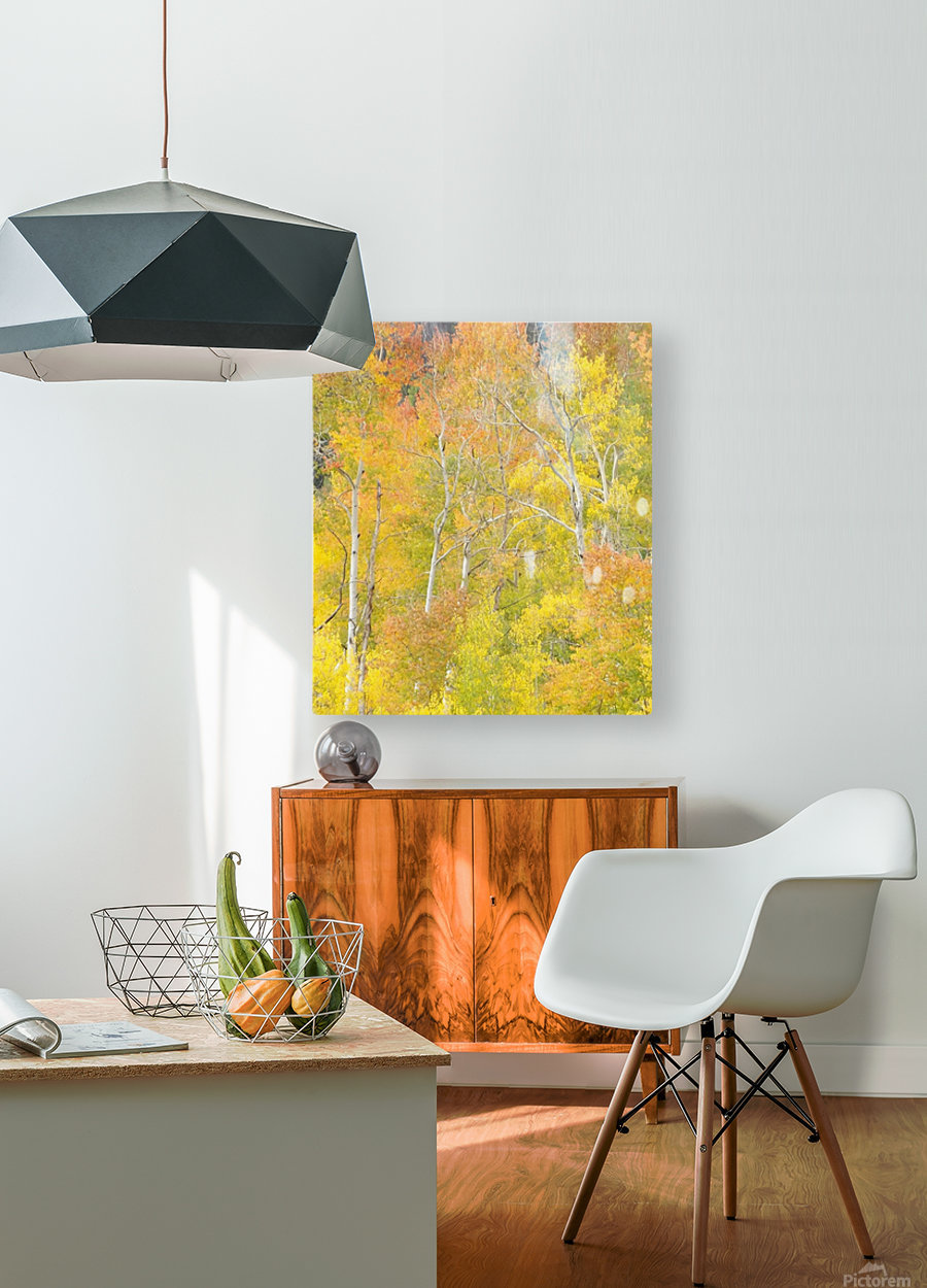 Changing Aspens - Vail Colorado  HD Metal print with Floating Frame on Back