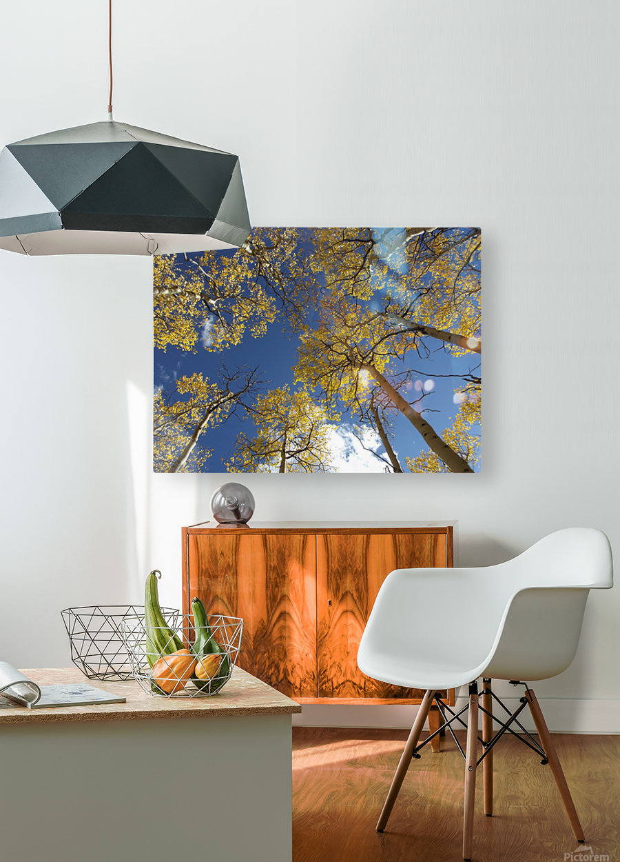 Aspens To Heaven  HD Metal print with Floating Frame on Back