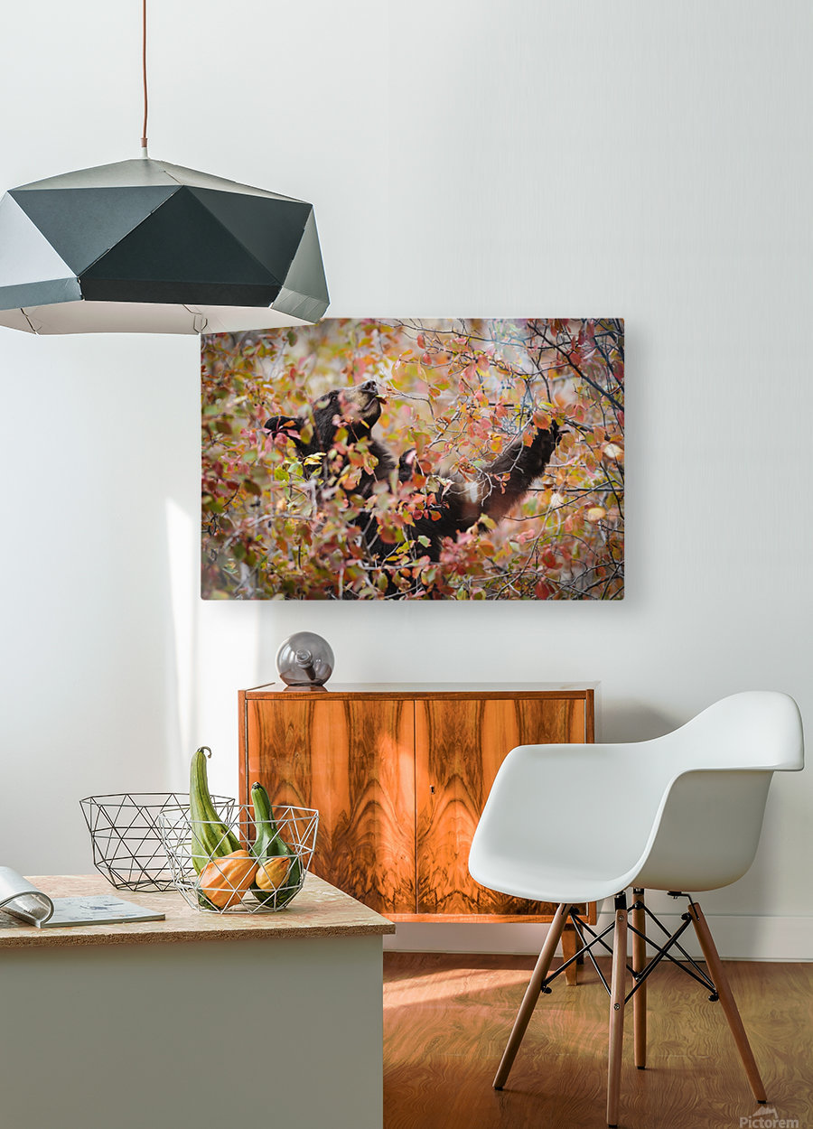 _T8C8285 Modifier 2  HD Metal print with Floating Frame on Back