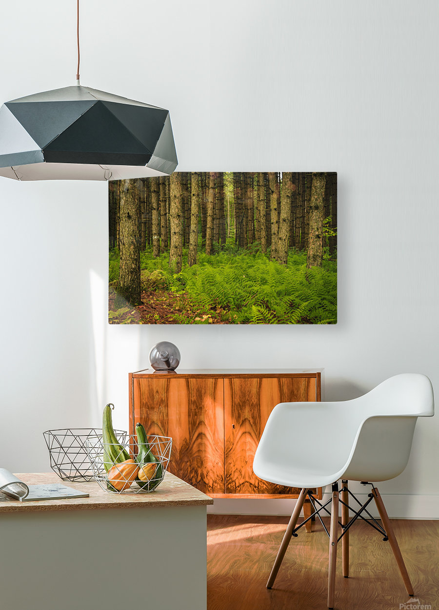 _S9A1813 Modifier  HD Metal print with Floating Frame on Back