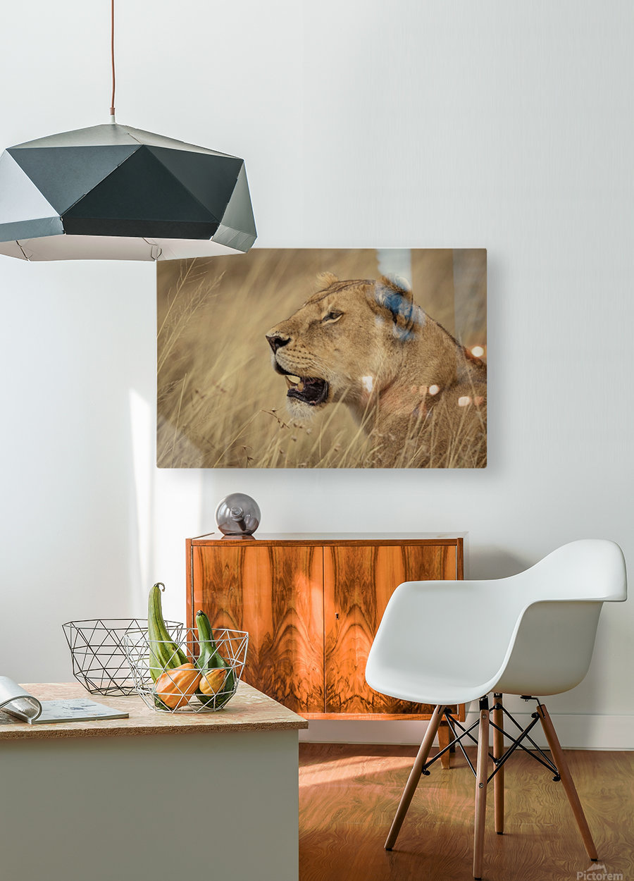 164A1810  HD Metal print with Floating Frame on Back