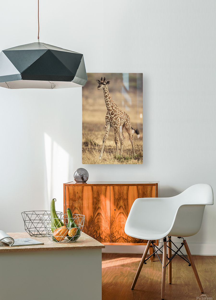 Little Girafe  HD Metal print with Floating Frame on Back
