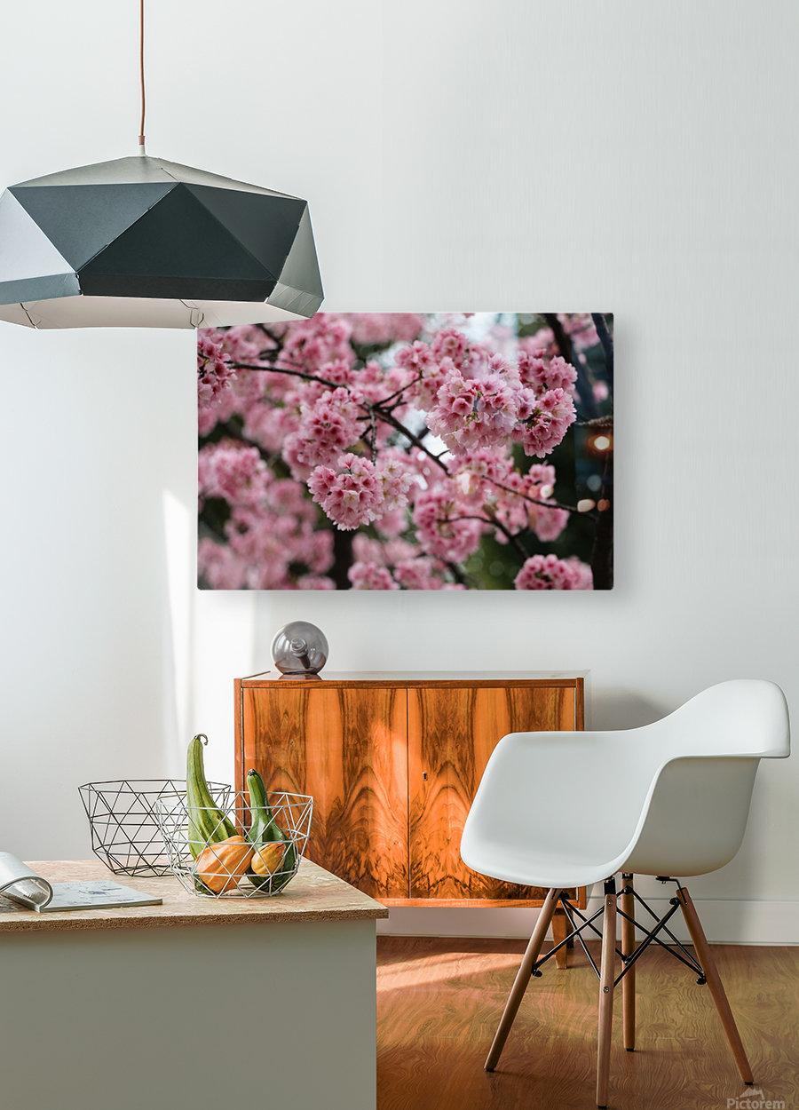 Sakura   HD Metal print with Floating Frame on Back