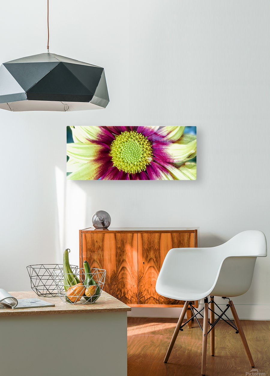 Chrysanthemum Daisy  HD Metal print with Floating Frame on Back
