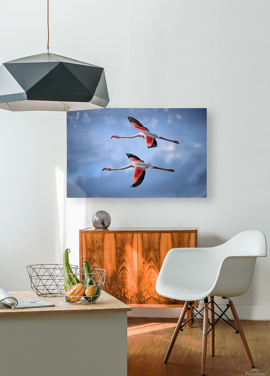 Greater Flamingos  HD Metal print with Floating Frame on Back