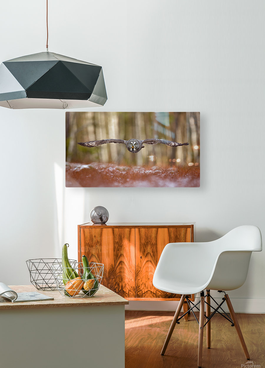 Great grey owl  HD Metal print with Floating Frame on Back