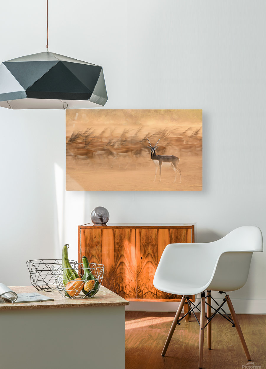 Black Bucks  HD Metal print with Floating Frame on Back
