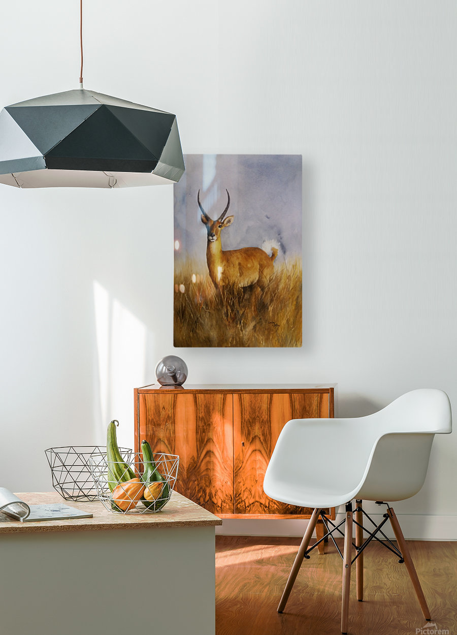 Waterbuck  HD Metal print with Floating Frame on Back