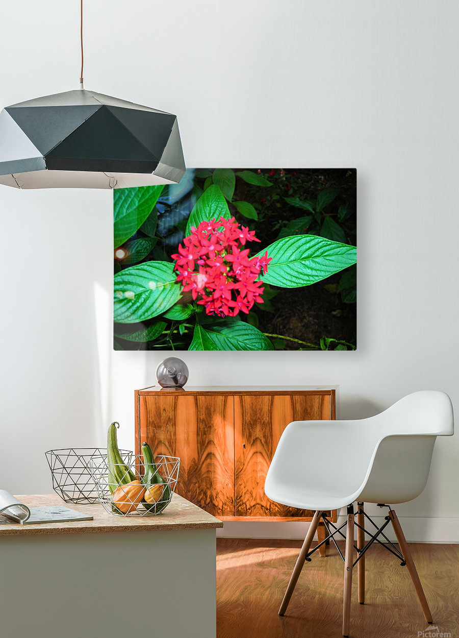 Flower66  HD Metal print with Floating Frame on Back