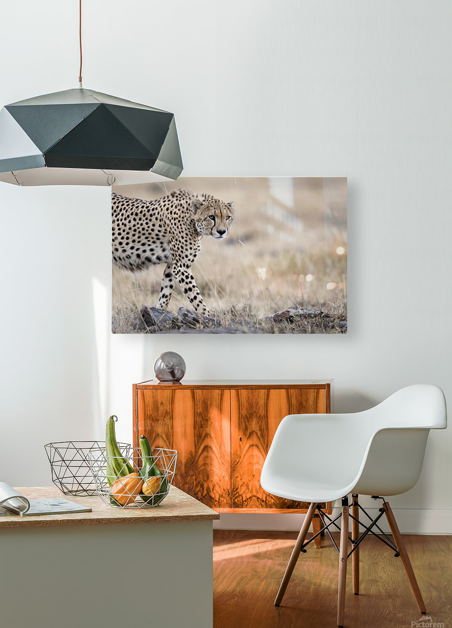 Cheetah Bro  HD Metal print with Floating Frame on Back