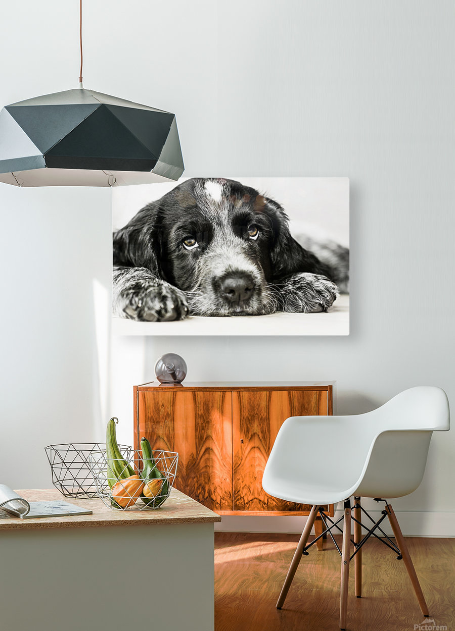 Cute Cocker Spaniel Puppy  HD Metal print with Floating Frame on Back