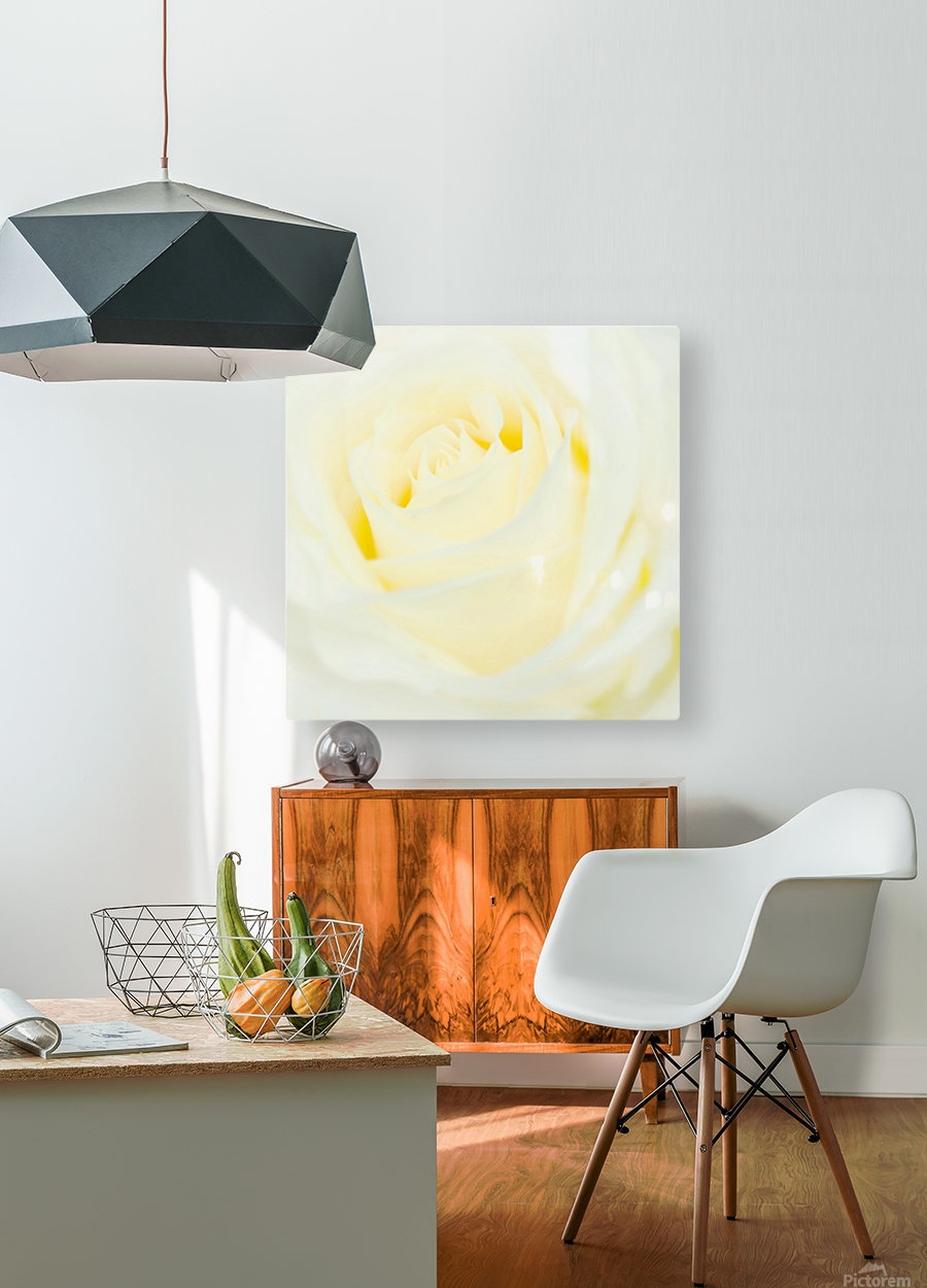 The White Rose  HD Metal print with Floating Frame on Back