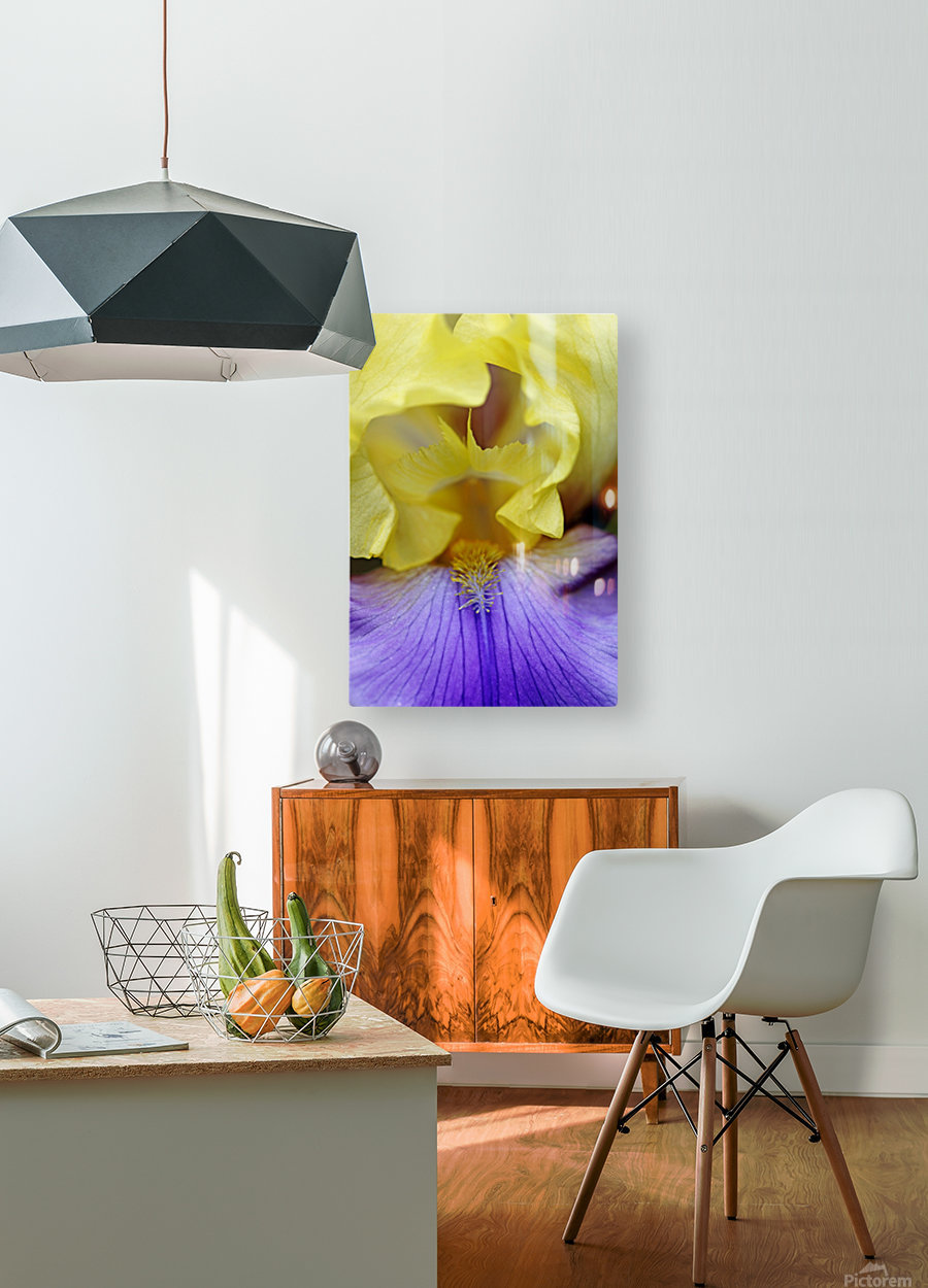 Lavender And Yellow Iris Heart  HD Metal print with Floating Frame on Back